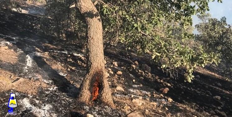 شبلیز پاتاوه در آتش میسوزد/تصاویر