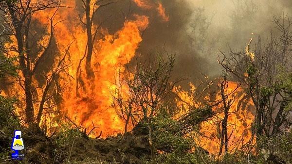 شعله ور شدن آتش در جنگلهای کوه نیر در شهرستان بویراحمد/درخواست کمک و استمداد جهت مهار  آتش سوزی
